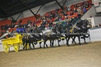 World Percheron Congress 2014
