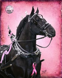 Drive 4 the Cure, World Percheron Congress 2014