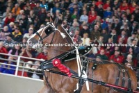 World Clydesdale Show 2015