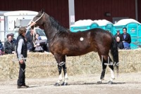 Great Canadian Dutch Harness & Driving Horse Sale 2017, Friday