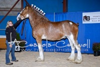 Maritime Draft Horse Sale 2017