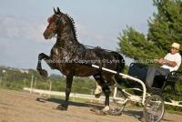 Home Www Horsephotos Ca